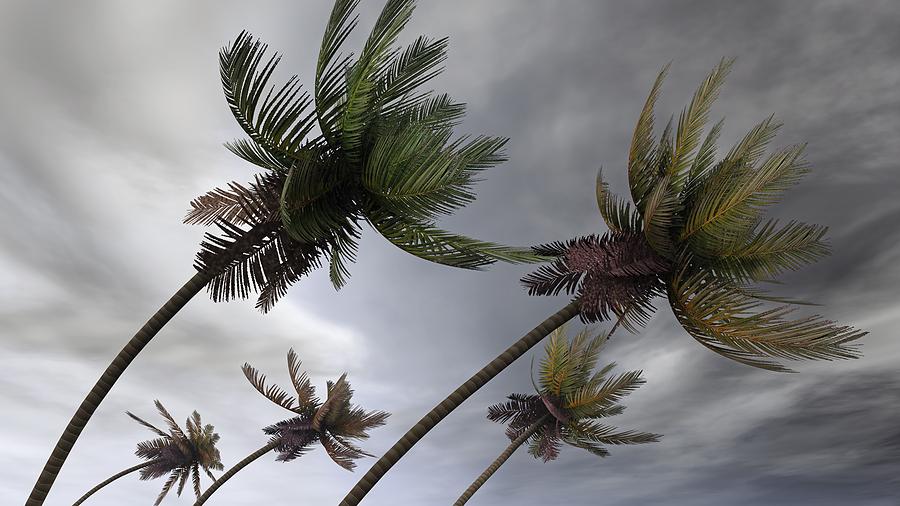 palm tree storm quotes quotesgram
