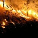 texas wildfire power line