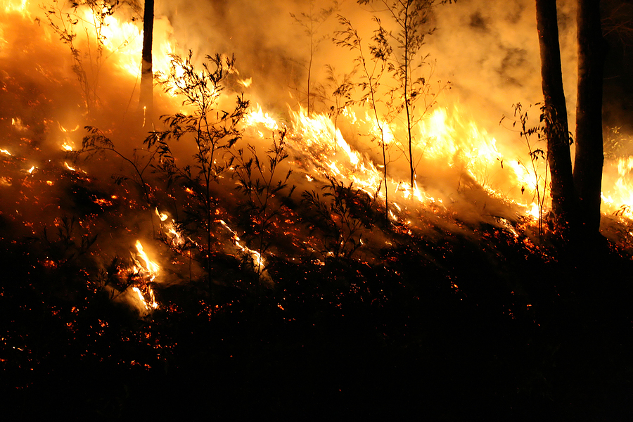 Utility in California Slow to Pull Plug Before Wildfire Erupted