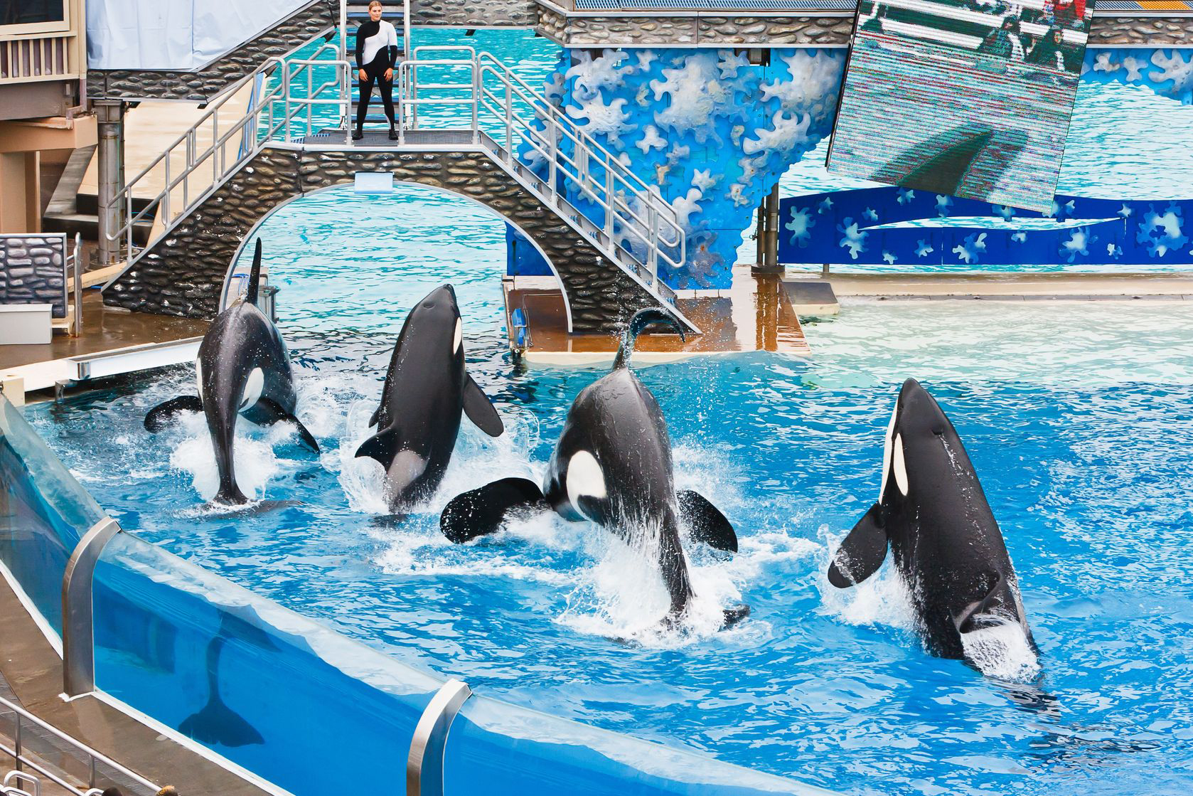 Drowning In Negative Publicity Seaworld Ends Killer Whale