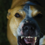 dog_attack