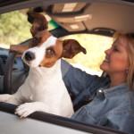 driver_dog