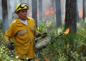Land managers are seen trying to contain a fire. A new UF/IFAS study shows southern land managers would like to use prescribed burns more frequently to prevent wildfires and protect the ecosystem. But they face numerous barriers, including insurance, costs and proximity to development. (UF/IFAS file photo)