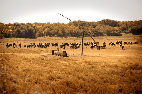 Megadroughts Brought by Climate Change a Challenge for Texas Ranchers