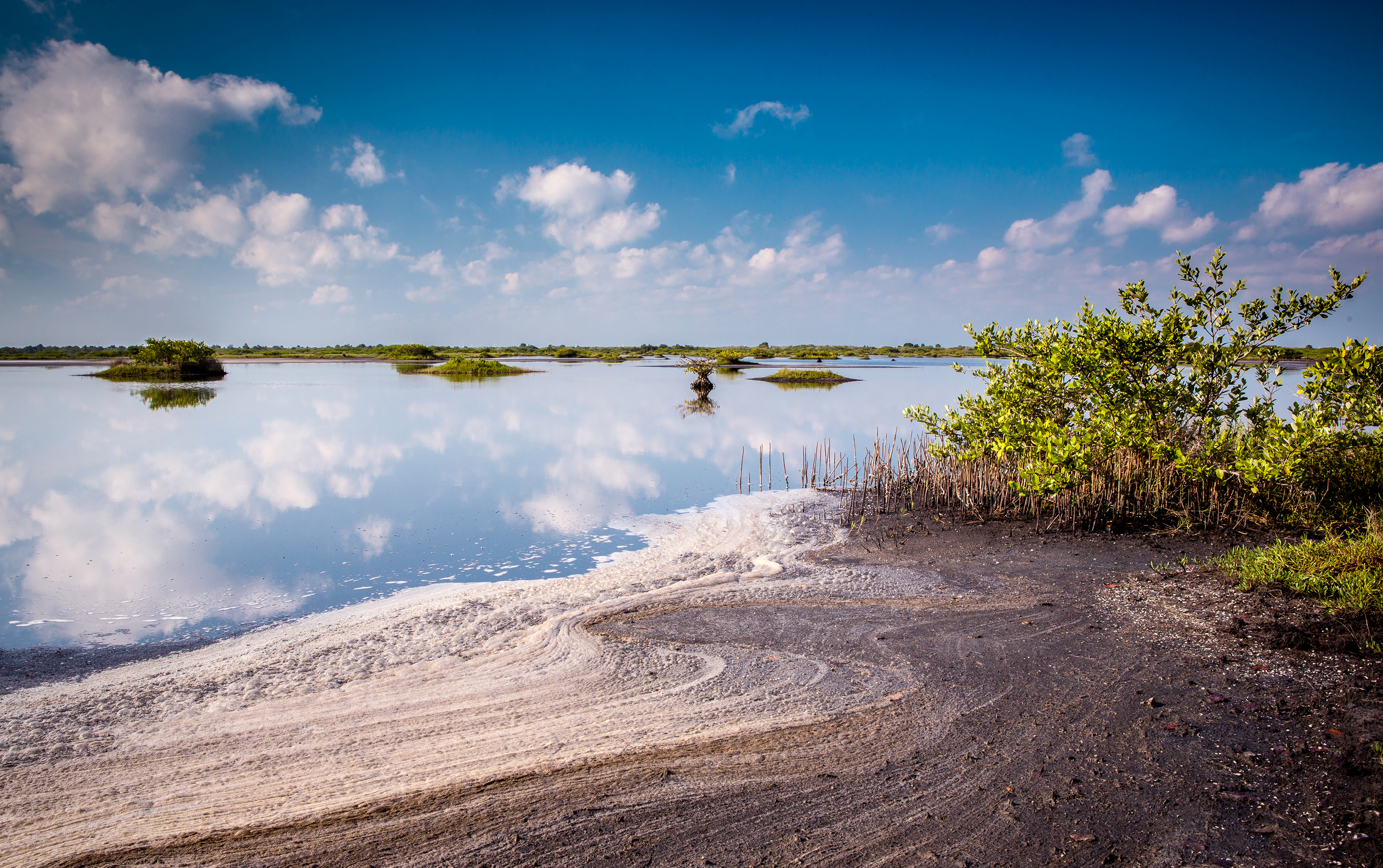 The Nature Conservancy to Address South Florida Climate Risks