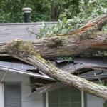 tree_roof