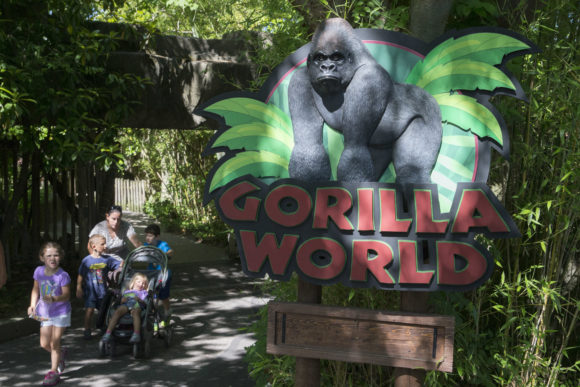 Visitors enter the Gorilla World exhibit at the Cincinnati Zoo & Botanical Garden, Tuesday, June 7, 2016, in Cincinnati. The Cincinnati Zoo reopened its gorilla exhibit Tuesday with a higher, reinforced barrier installed after a young boy got into the exhibit and was dragged by a 400-pound gorilla, which was then shot and killed. (AP Photo/John Minchillo)