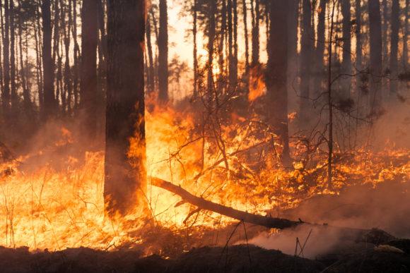 Judge Won't Approve California Wildfire Victims Letter Attacking PG&E
