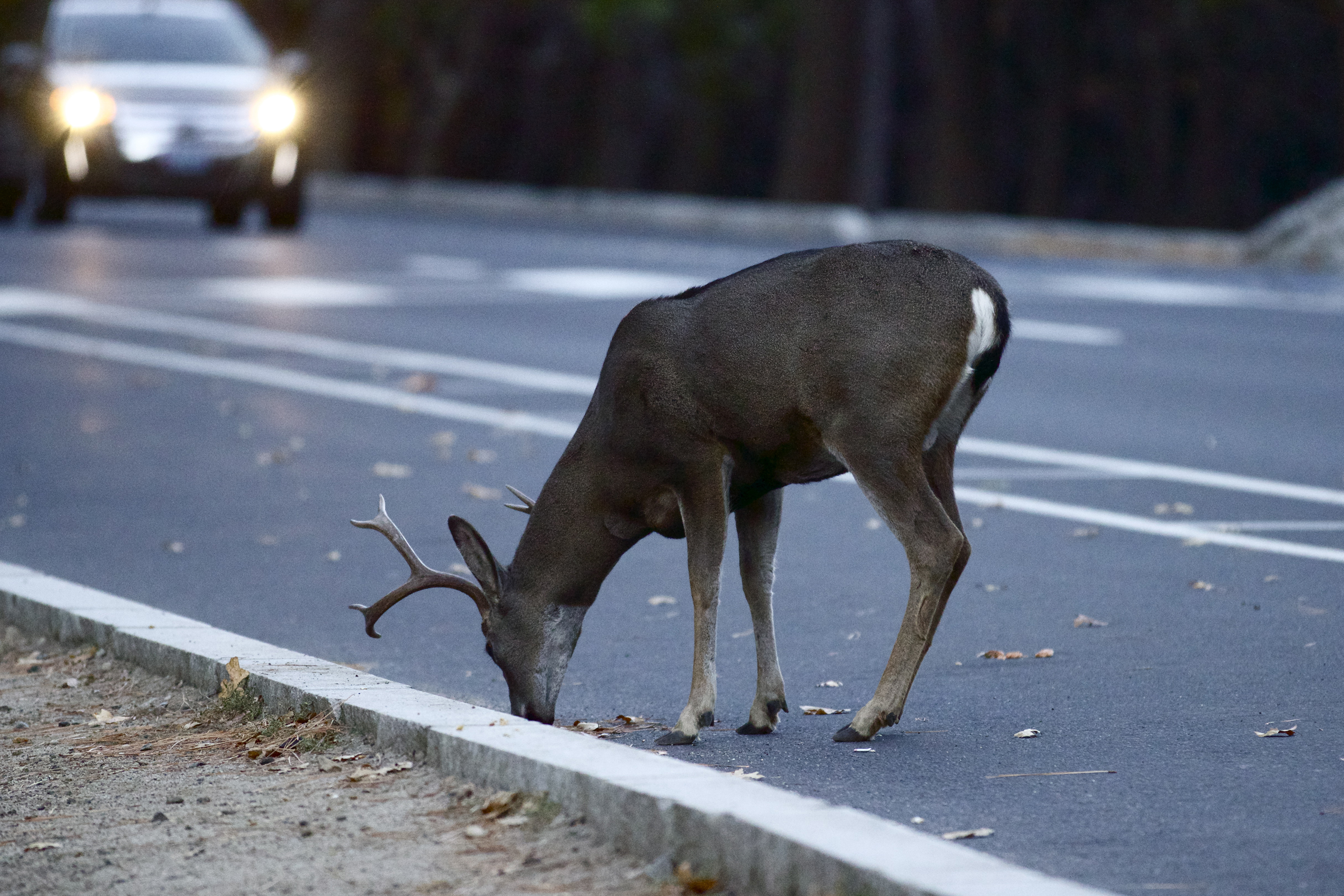 Print National Insurance Number >> Number of Deer-Vehicle Collisions Down in Indiana in 2016