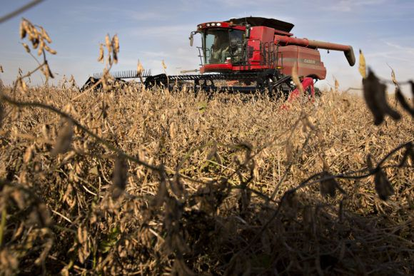 Crop damage from herbicide dicamba a growing problem across us crop damage from herbicide dicamba a growing problem across us farm belt platinumwayz