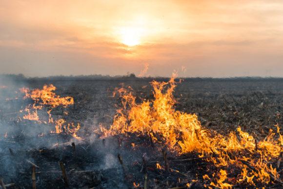 Forest Service Orders Colorado Train to Halt Wildfire Mitigation