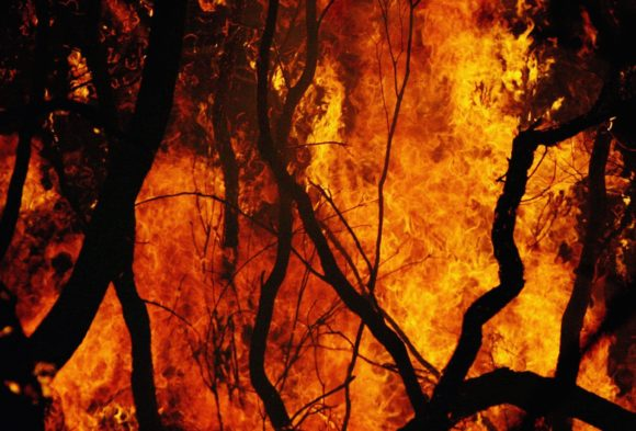 Fire Official Says Arcing Power Lines Caused Big Nevada Brush Fire