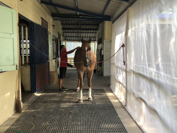 Virus from Africa Kills Horses in Thailand, Showing Dangers of Biosecurity Gaps