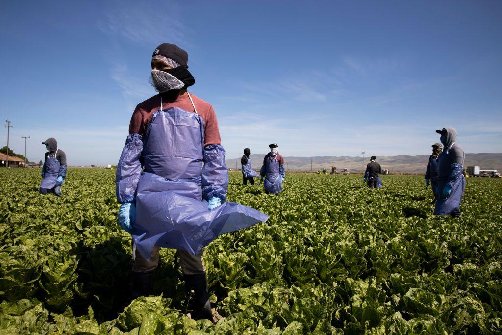 Farm Workers Getting Sick Spreading Coronavirus As Peak Produce Season Begins