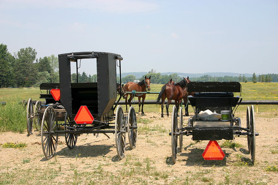 amish buggies kentucky
