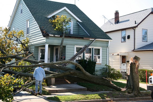 tree damaged house