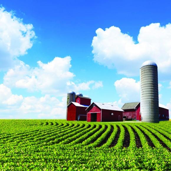 farmers-brace