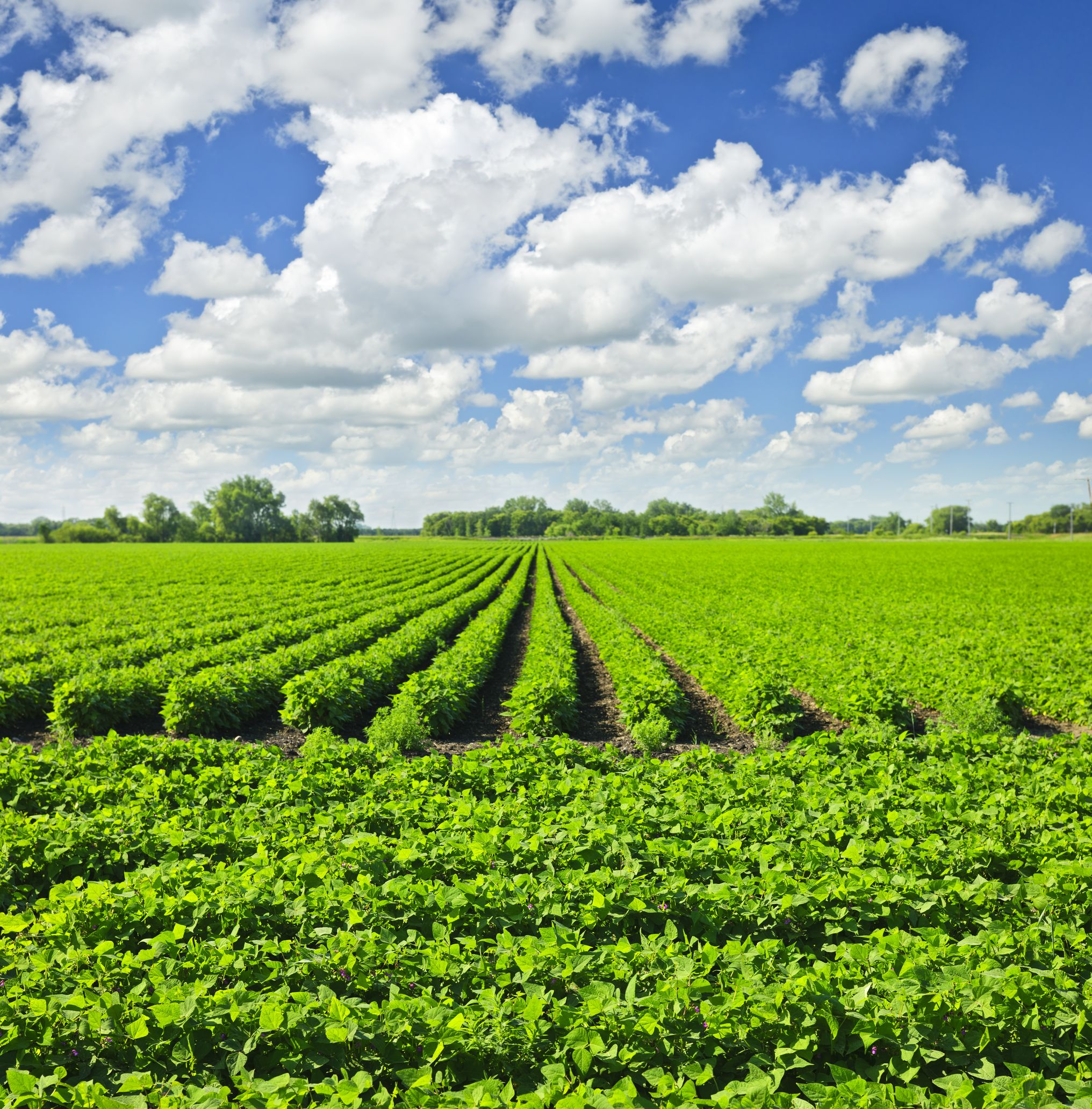 how to draw a feild of crops