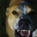 dog_bite