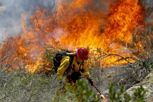 California Fire Capt. Mark Miller lights a backfire as he and a crew  try to knock down a brush fire near Oriole Court in Carlsbad, Calif., on Wednesday. Thousands were asked to evacuate their homes in Carlsbad after the blaze erupted at about 10:34 a.m. Wednesday and spread through rapidly heavy brush before jumping into residential areas. (AP Photo/U-T San Diego, Hayne Palmour IV)