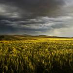 barley_Storm