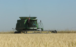 A rice harvester works a field belonging to rice farmer Mike DeWitt near Davis, Calif. DeWitt is among the Sacramento Valley farmers who planted 25 percent less rice than normal because of water cutbacks. (AP Photo/Rich Pedroncelli)